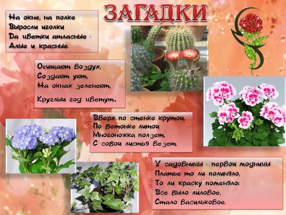 Дошкольникам о комнатных растениях картинки схемы 154